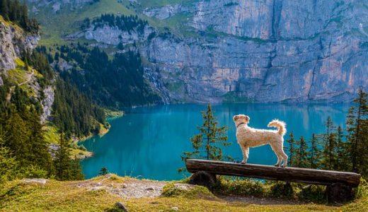 愛犬と一緒に夏のレジャーを楽しみましょう!【関西編】