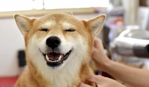 触られる犬