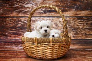 かごに入った子犬