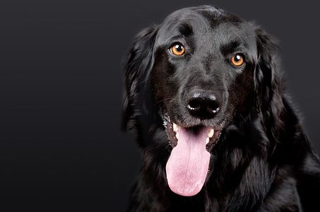 犬のカーミング・シグナル|愛犬との絆を深めるために