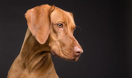 目をそらす犬