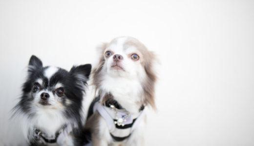 【犬を迎える】環境省が定める犬との生活の基準とは?