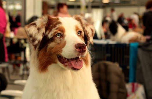 保護犬カフェの犬