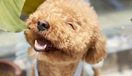 【愛犬を思う気持ち】犬を大切にすることに対する非難について