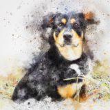 ミックス犬・ポンスキーの悲劇│犬を愛する人が今考えるべきこと