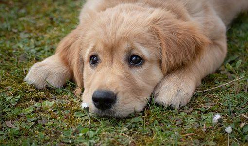 犬嫌いな人との接し方│マナーを守りお互い不快な思いをしないように