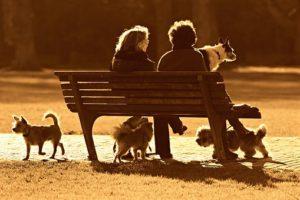 仲良しのご近所の方と犬