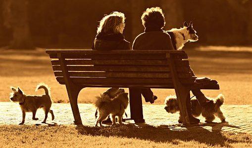 【犬友トラブル】最低限のマナーを守り気持ちよくお付き合いを!