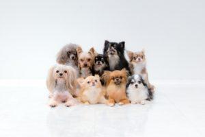 9頭の小型犬