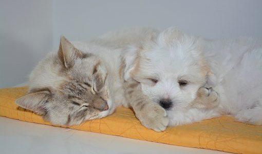 【犬と猫】どっちも一緒に暮らしたい│安全な飼育方法と仲良し動画もご紹介!