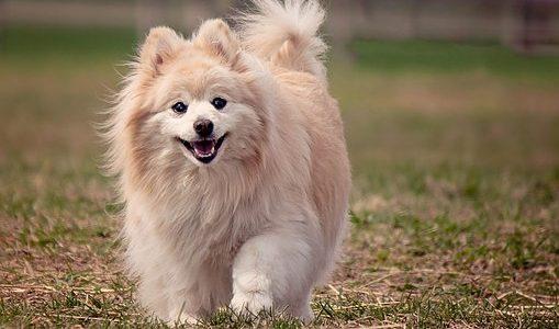 【犬のしつけ】愛犬のしつけは「ほめる」ことが大切!