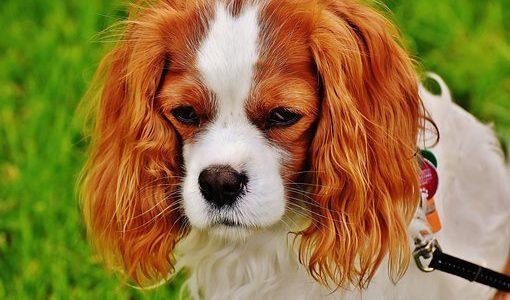 【犬の心の病】犬もうつ病になるの?│症状・原因・予防と改善方法