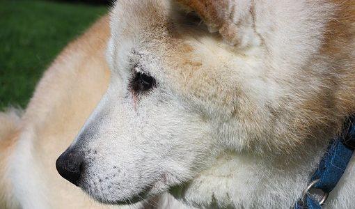 保護犬と家族になりたい!│一人暮らしでも保護犬を迎えられるの?