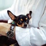 【愛犬と飼い主の健康】犬と暮らすと長生きできる!
