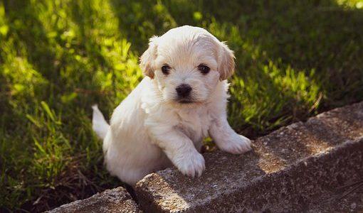 【子犬の社会化】パピーパーティーに参加しましょう!