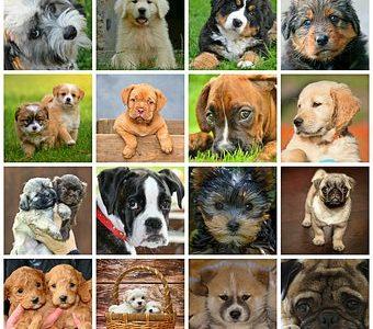 【犬種の魅力】犬種について調べていて感じたこと