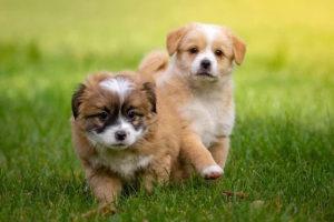 2頭の子犬