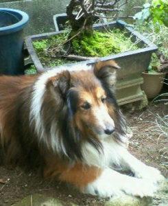 庭にいる愛犬