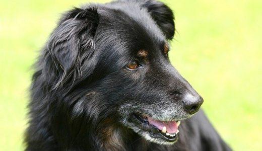 【保護犬を迎える】愛犬を迎えるなら保護犬という選択