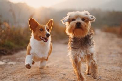 【愛犬と楽しくお散歩】便利で可愛いお散歩グッズをご紹介!