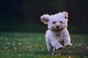 野原を走り回る犬